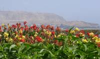 Flowers' view of Chorrillos