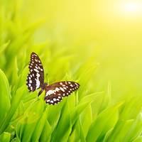Butterfly sitting on a fresh green grass