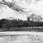 """""""Cantral Park Turtle Pond"""" by SusanPszenitzki"""