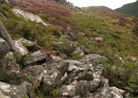 Rocks and heather