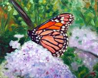 Monarch butterfly study