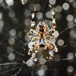 """""""Bokeh On The Web"""" by TheNug"""
