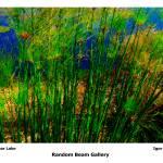 """Grass Near Lake"" by randombeam"