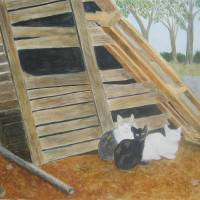 Barn Cats Art Prints & Posters by Liz Field