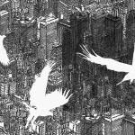 """Birds"" by davidbushell"