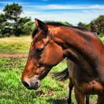 """Horse Portrait"" by johncorney"
