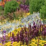 """""""Flower Palette"""" by purpleflower"""