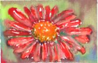 Red Gerber Daisy Watercolor II