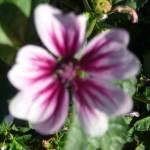 """""""Purple Beauty"""" by GuardianAngel68"""
