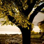 """Tree on English Bay"" by raetucker"