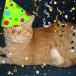 """Orange Tabby Cat Birthday Party Animal"" by crazyabouthercats"