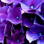 """lilac macro"" by Suzannasphotography"
