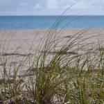 """Sea Grass at John D. MacArthur State Park Beach"" by michellealexis"