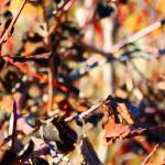"""""""Memories of Autumn       0759-6"""" by BarbaraLin"""