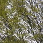 """Trees"" by GuardianAngel68"
