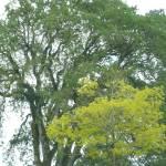 """""""Tree Beauty!"""" by GuardianAngel68"""