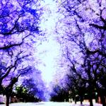 """Spring in puple"" by night"