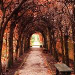 """""""Fall Passage"""" by FordLou"""