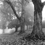 """One Foggy Day"" by DGPhotographicArt"