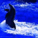 """""""Dolphin Performance"""" by SophieArt"""