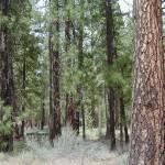 """Beautiful Trees"" by GuardianAngel68"