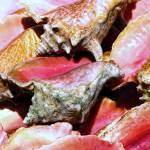 """""""Conch"""" by jackrosado57"""