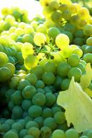 Sun Kissed Grapes