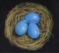 Robin's Nest With Eggs, Color Pencil