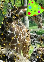 Giraffe Party Animal
