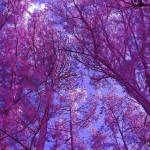 """""""Pink Forest"""" by bettynorthcutt"""