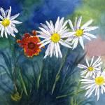 """""""Summit Daisies plus Red Blanket Flower in Colorado"""" by vickeysart"""