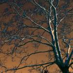 """""""Dark Woods II"""" by bettynorthcutt"""