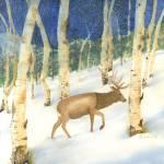 """Winter Elk in Rocky Mountain National Park"" by vickeysart"