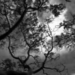 """""""Arbutus Tree Filigree"""" by UrsBoxler"""