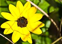 Yellow Flower Feaver
