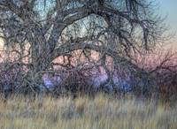 Cottonwood Sunset Dream