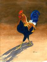 Country Rooster, Proud. Alive, Free and Beautiful