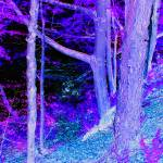 """sensory trees"" by Videotape"