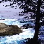 """A Tree on the Beach"" by eti"