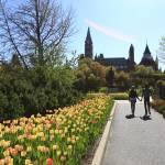 """""""Ottawa Tulips #3"""" by andreifilippov"""