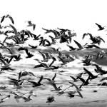 """Birds"" by eti"