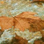 """""""The leaf"""" by eti"""