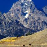 """Grand Teton Buffalo"" by JTPatterson"
