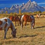 """Teton Equine Dining"" by JTPatterson"