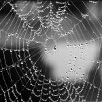 """""""Spider Was Here"""" by barbee"""