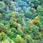 """virginia trees"" by sapphirereborn"