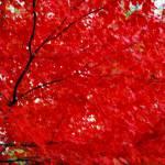 """glowing tree"" by sapphirereborn"