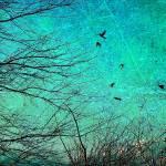 """Be Free"" by angelandspot"
