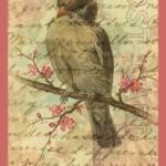 """Sparrow"" by angelandspot"