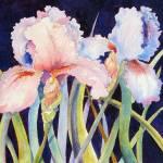 """""""Two Irises"""" by lindahaile"""